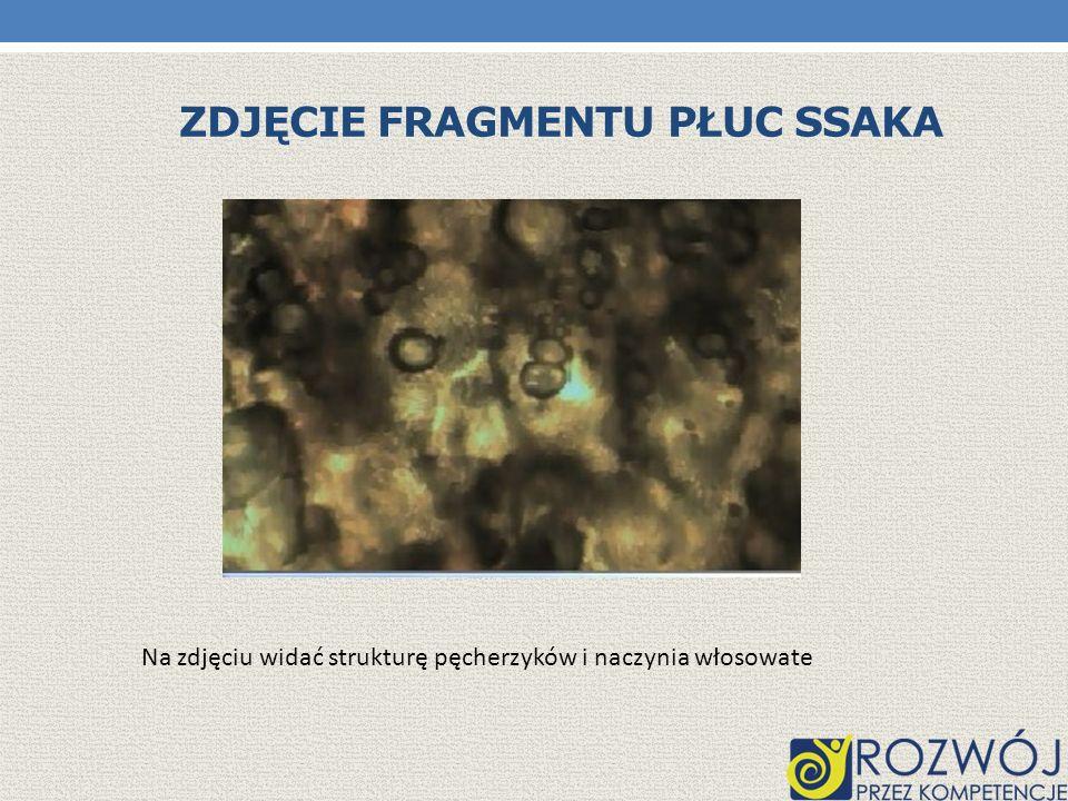 Zdjęcie fragmentu płuc ssaka