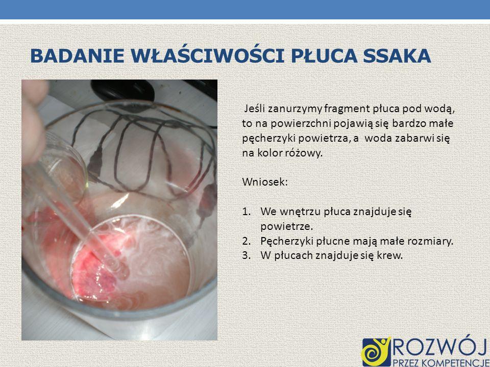 Badanie właściwości płuca ssaka