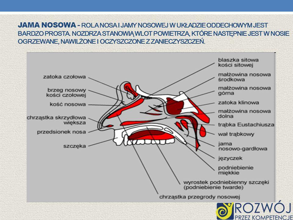 Jama nosowa - Rola nosa i jamy nosowej w układzie oddechowym jest bardzo prosta.
