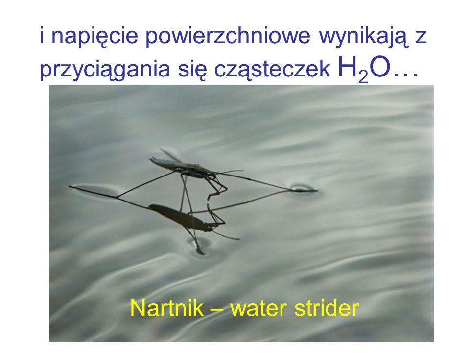i napięcie powierzchniowe wynikają z przyciągania się cząsteczek H2O…