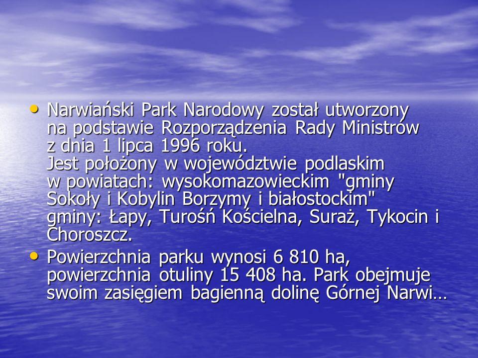 Narwiański Park Narodowy został utworzony na podstawie Rozporządzenia Rady Ministrów z dnia 1 lipca 1996 roku. Jest położony w województwie podlaskim w powiatach: wysokomazowieckim gminy Sokoły i Kobylin Borzymy i białostockim gminy: Łapy, Turośń Kościelna, Suraż, Tykocin i Choroszcz.