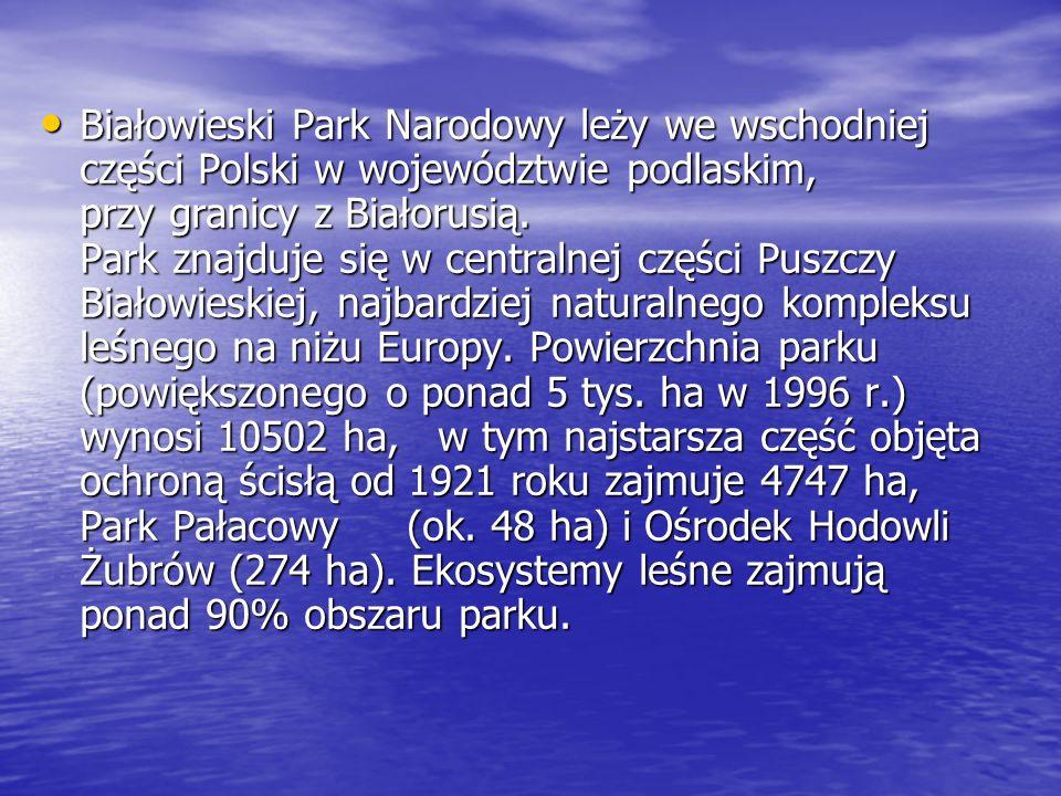 Białowieski Park Narodowy leży we wschodniej części Polski w województwie podlaskim, przy granicy z Białorusią.