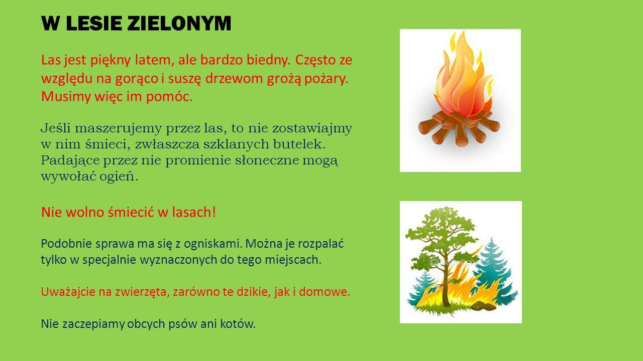 W LESIE ZIELONYM Las jest piękny latem, ale bardzo biedny. Często ze względu na gorąco i suszę drzewom grożą pożary. Musimy więc im pomóc.