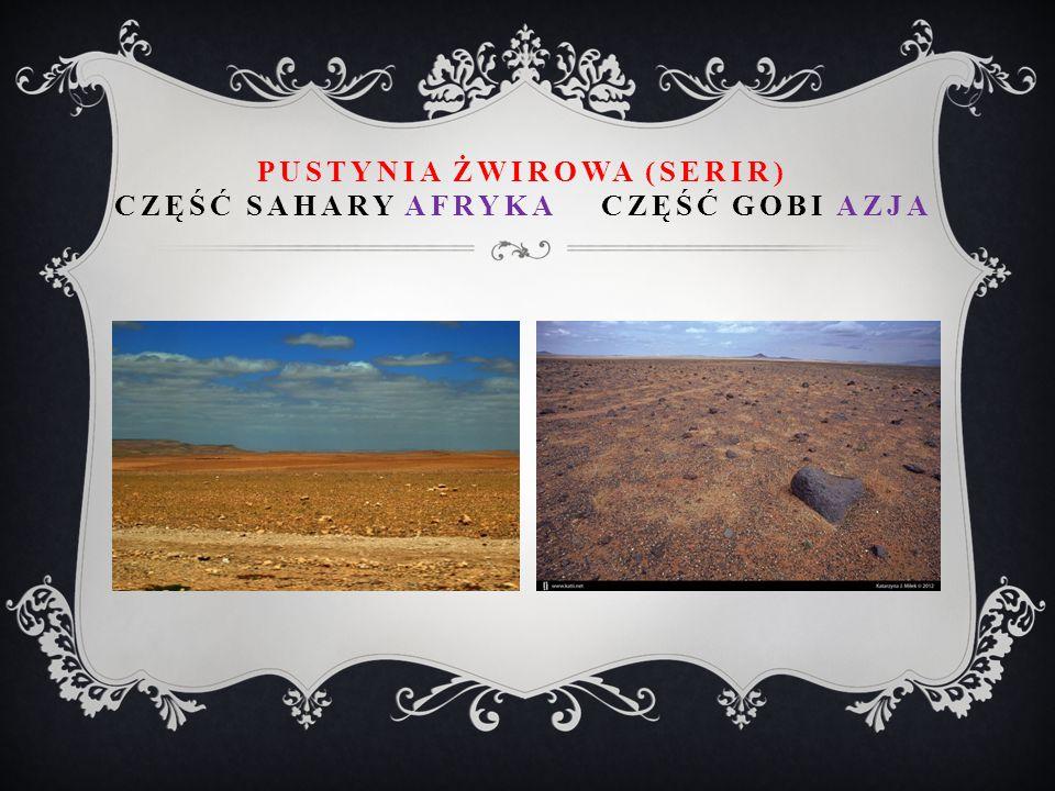 Pustynia żwirowa (serir) część Sahary Afryka część Gobi Azja