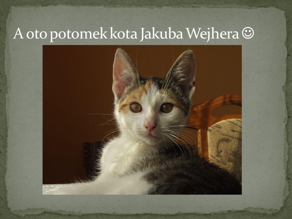 A oto potomek kota Jakuba Wejhera 