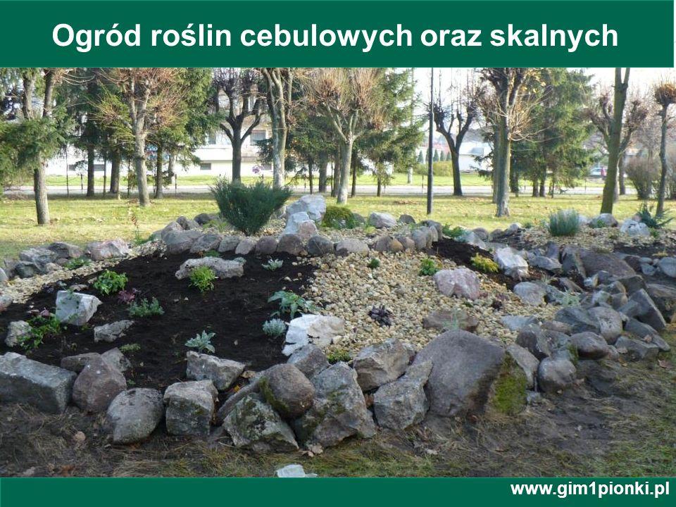 Ogród roślin cebulowych oraz skalnych