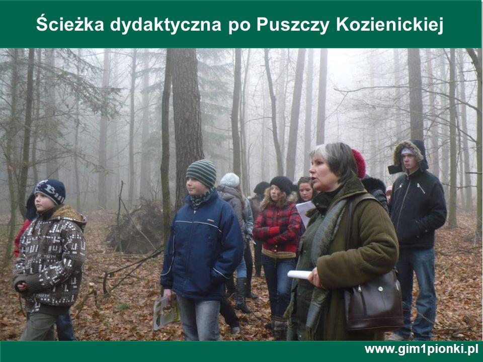 Ścieżka dydaktyczna po Puszczy Kozienickiej