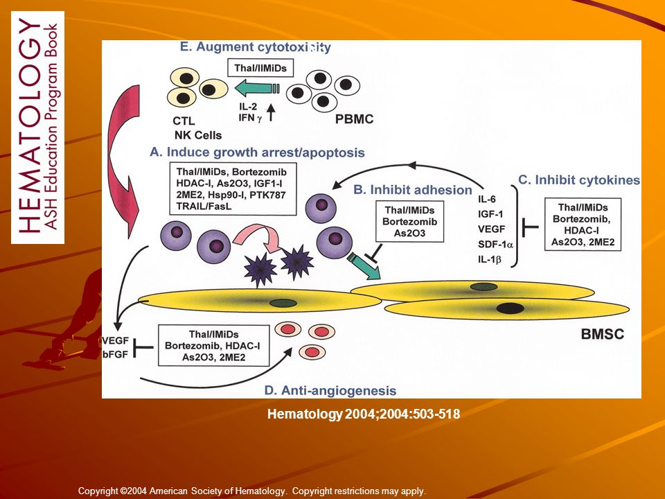 No Caption Found Hematology 2004;2004:503-518