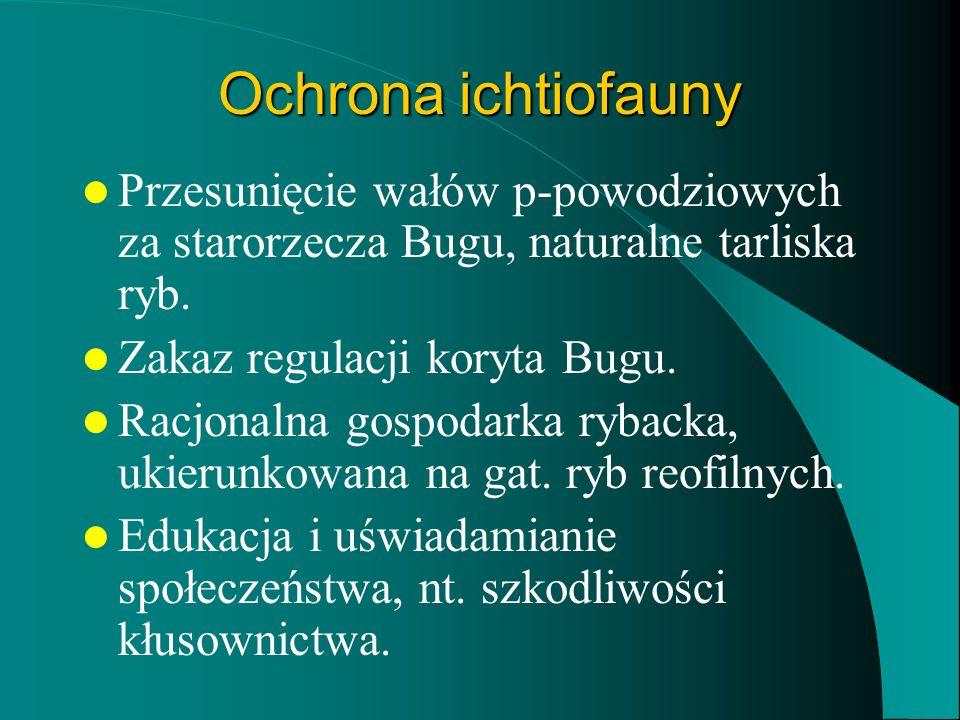 Ochrona ichtiofauny Przesunięcie wałów p-powodziowych za starorzecza Bugu, naturalne tarliska ryb. Zakaz regulacji koryta Bugu.