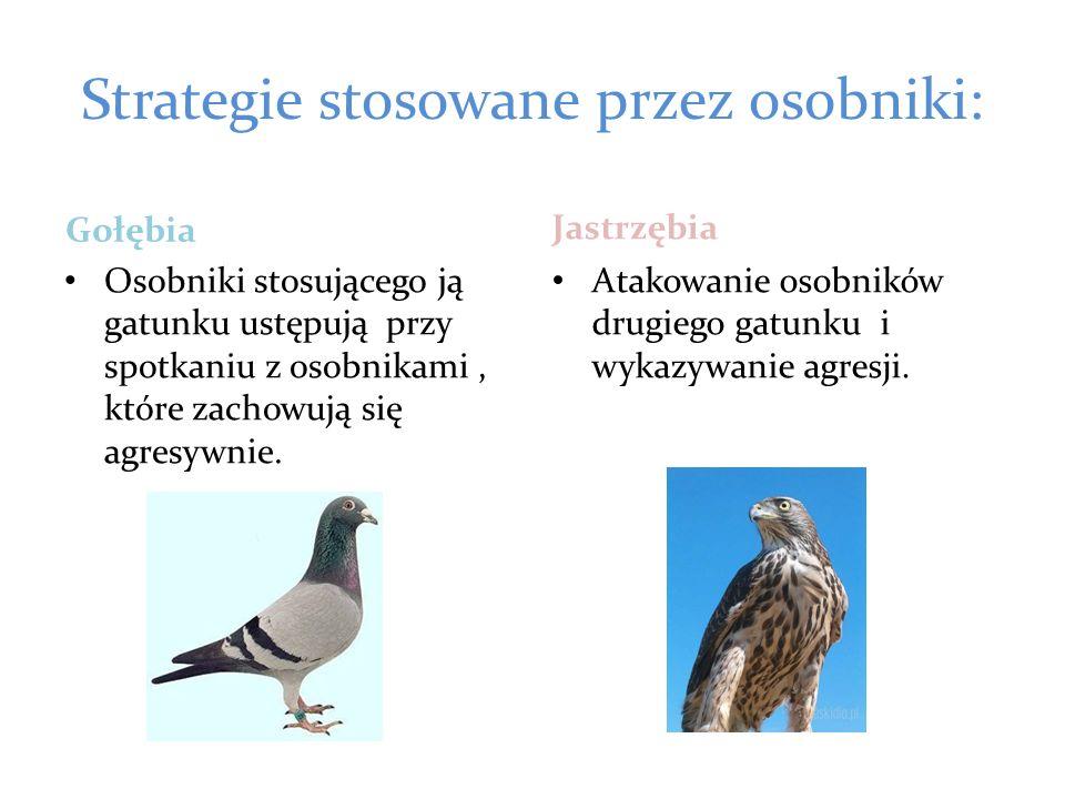Strategie stosowane przez osobniki: