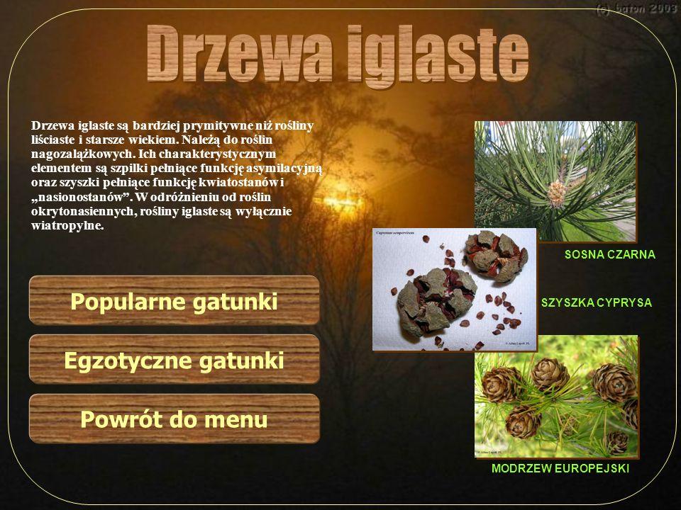 Drzewa iglaste Popularne gatunki Egzotyczne gatunki Powrót do menu
