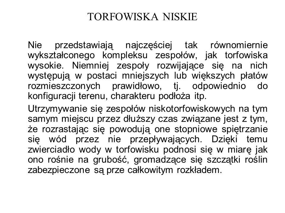 TORFOWISKA NISKIE
