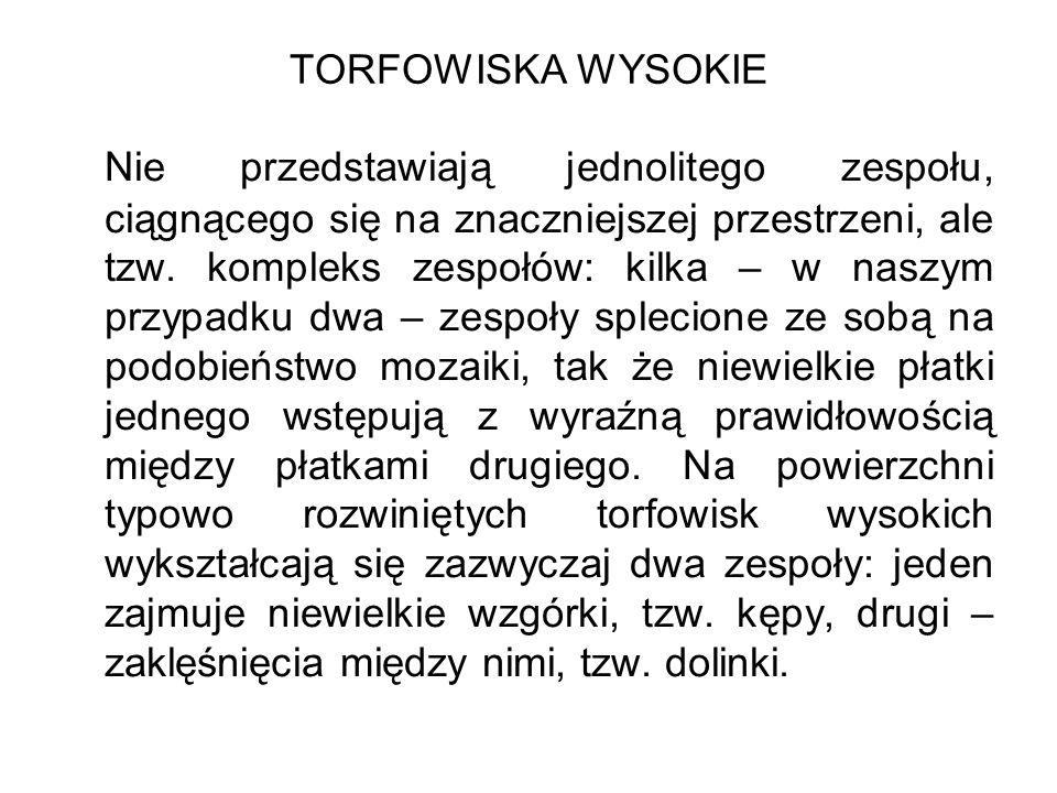 TORFOWISKA WYSOKIE