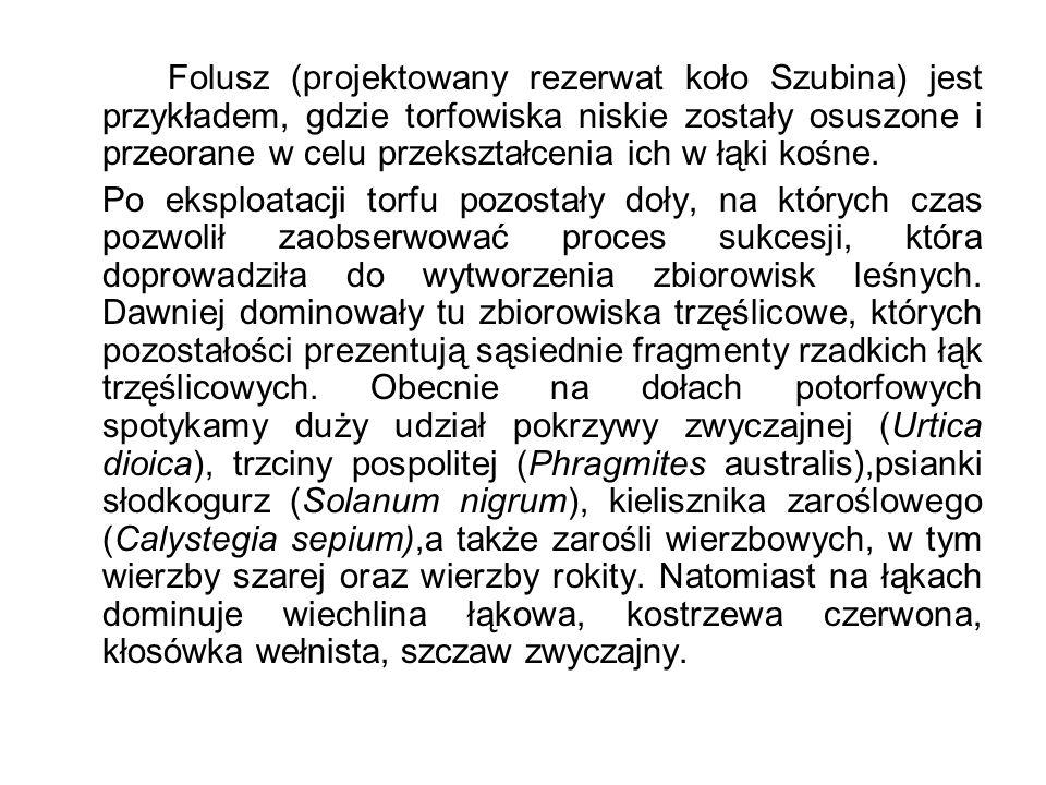 Folusz (projektowany rezerwat koło Szubina) jest przykładem, gdzie torfowiska niskie zostały osuszone i przeorane w celu przekształcenia ich w łąki kośne.