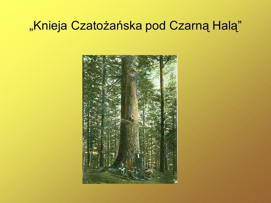 """Knieja Czatożańska pod Czarną Halą"