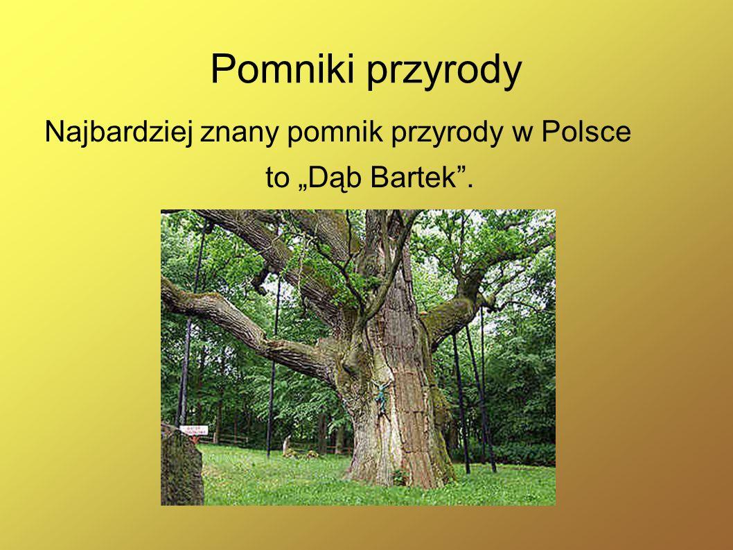 Pomniki przyrody Najbardziej znany pomnik przyrody w Polsce