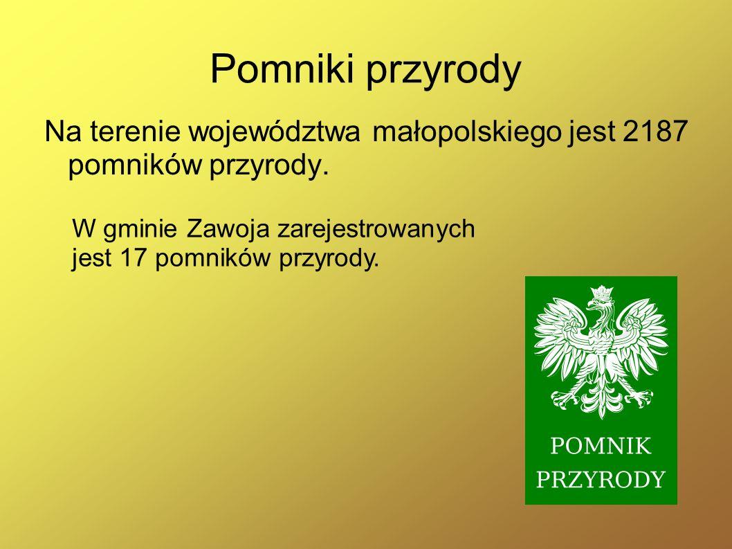 Pomniki przyrody Na terenie województwa małopolskiego jest 2187 pomników przyrody.