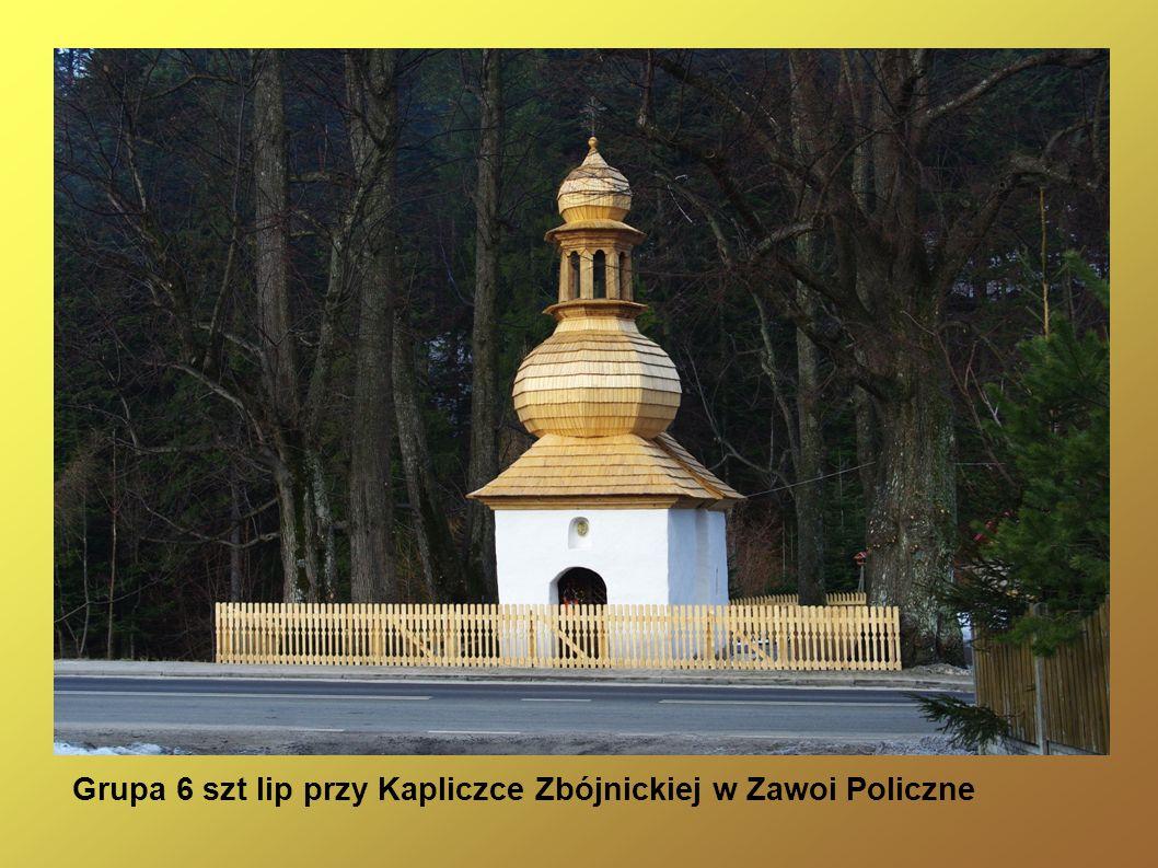 Grupa 6 szt lip przy Kapliczce Zbójnickiej w Zawoi Policzne