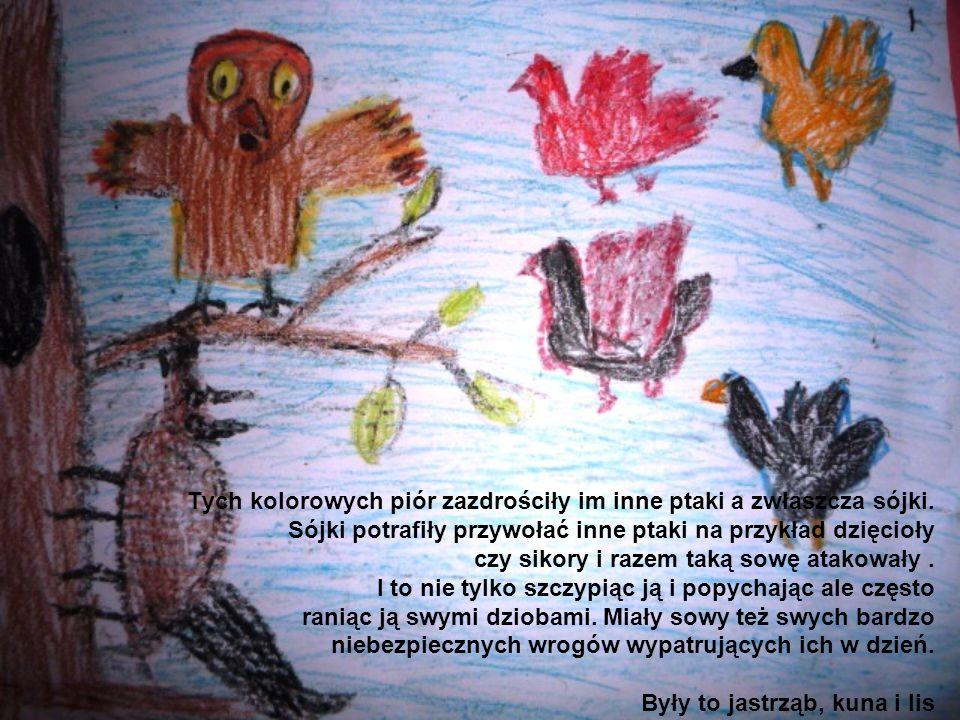 Tych kolorowych piór zazdrościły im inne ptaki a zwłaszcza sójki