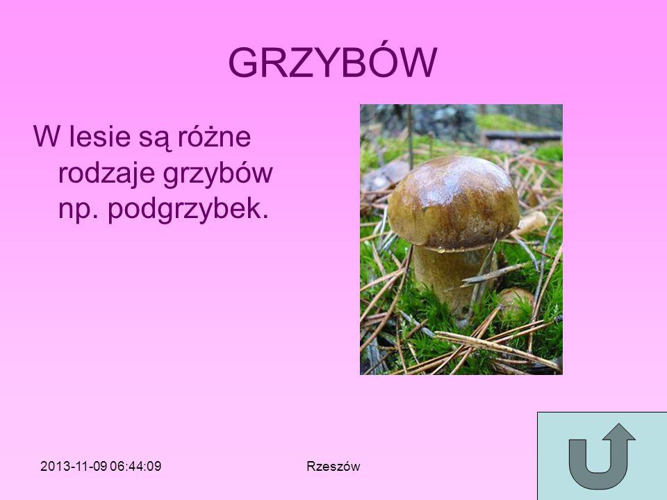 GRZYBÓW W lesie są różne rodzaje grzybów np. podgrzybek.