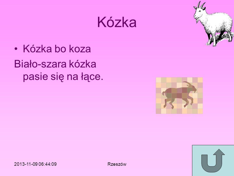 Kózka Kózka bo koza Biało-szara kózka pasie się na łące.