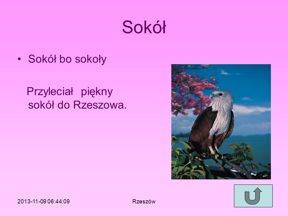Sokół Sokół bo sokoły Przyleciał piękny sokół do Rzeszowa.
