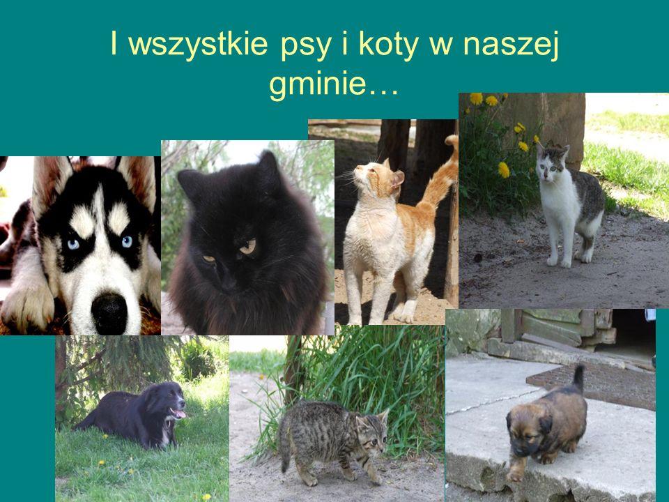 I wszystkie psy i koty w naszej gminie…