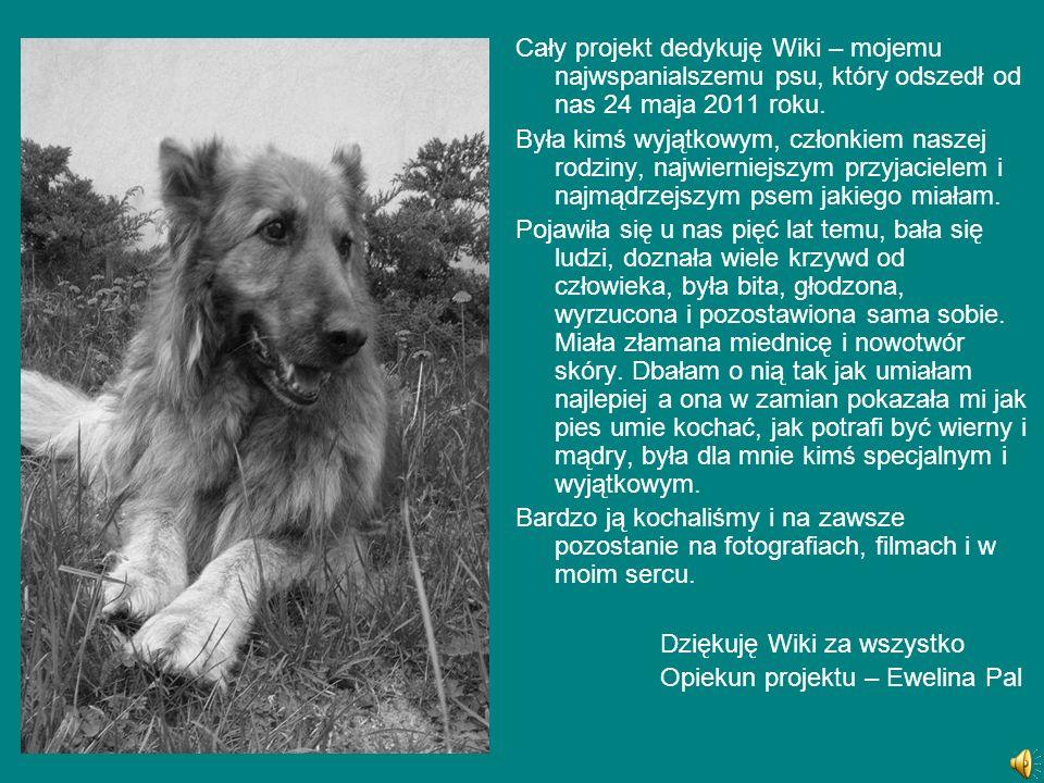 Cały projekt dedykuję Wiki – mojemu najwspanialszemu psu, który odszedł od nas 24 maja 2011 roku.