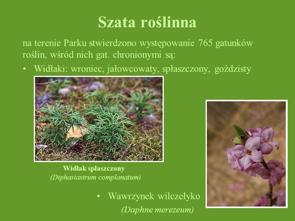 Szata roślinnana terenie Parku stwierdzono występowanie 765 gatunków roślin, wśród nich gat. chronionymi są: