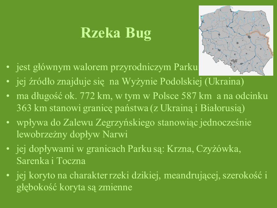 Rzeka Bug jest głównym walorem przyrodniczym Parku