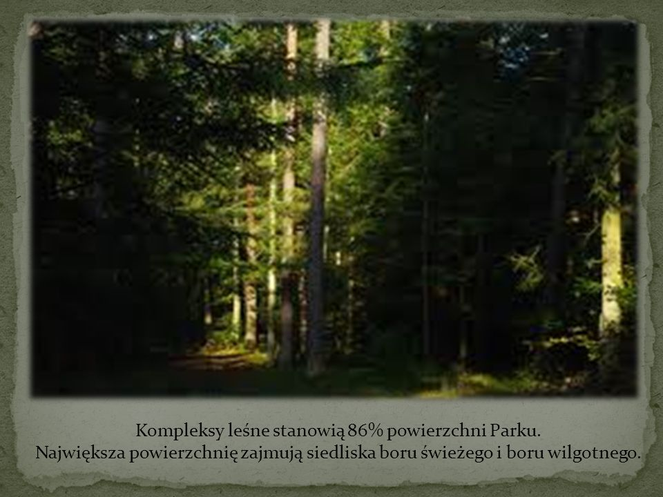 Kompleksy leśne stanowią 86% powierzchni Parku.