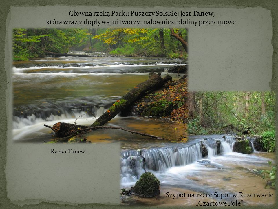 Główną rzeką Parku Puszczy Solskiej jest Tanew,