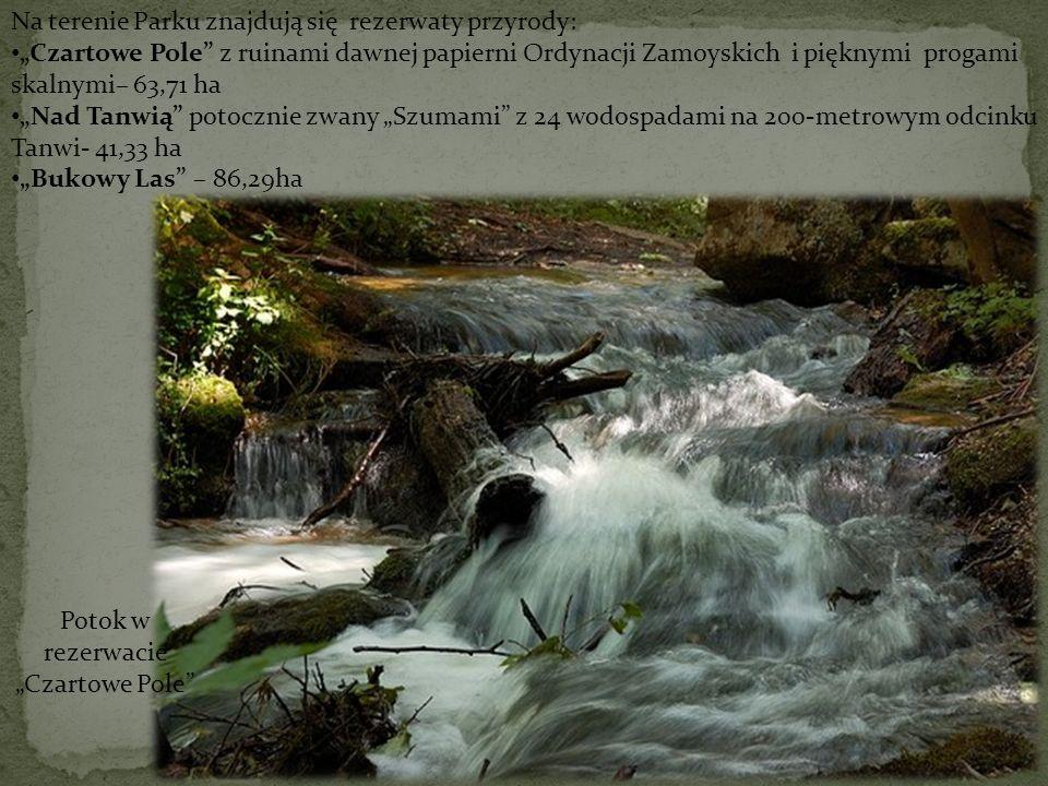 """Potok w rezerwacie """"Czartowe Pole"""