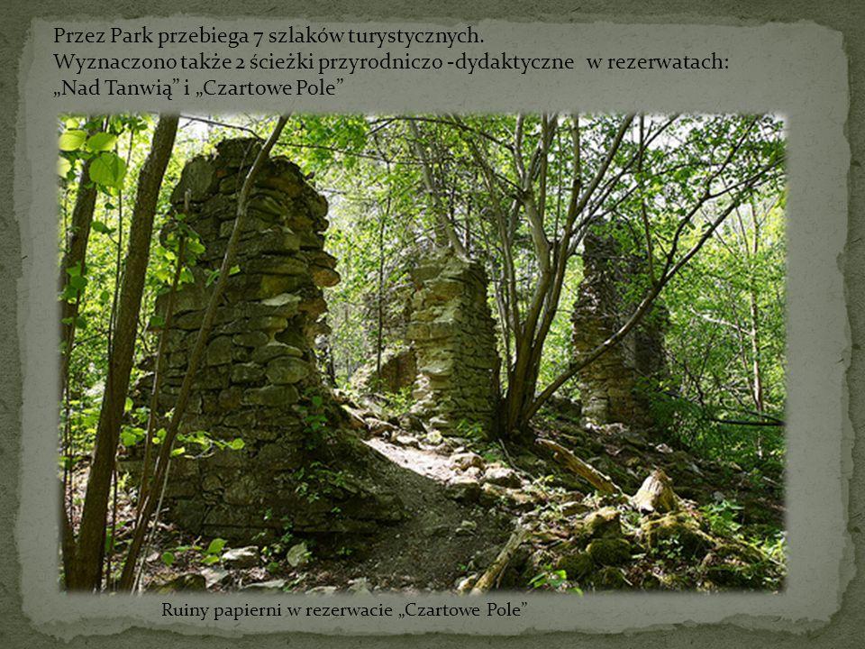 """Ruiny papierni w rezerwacie """"Czartowe Pole"""