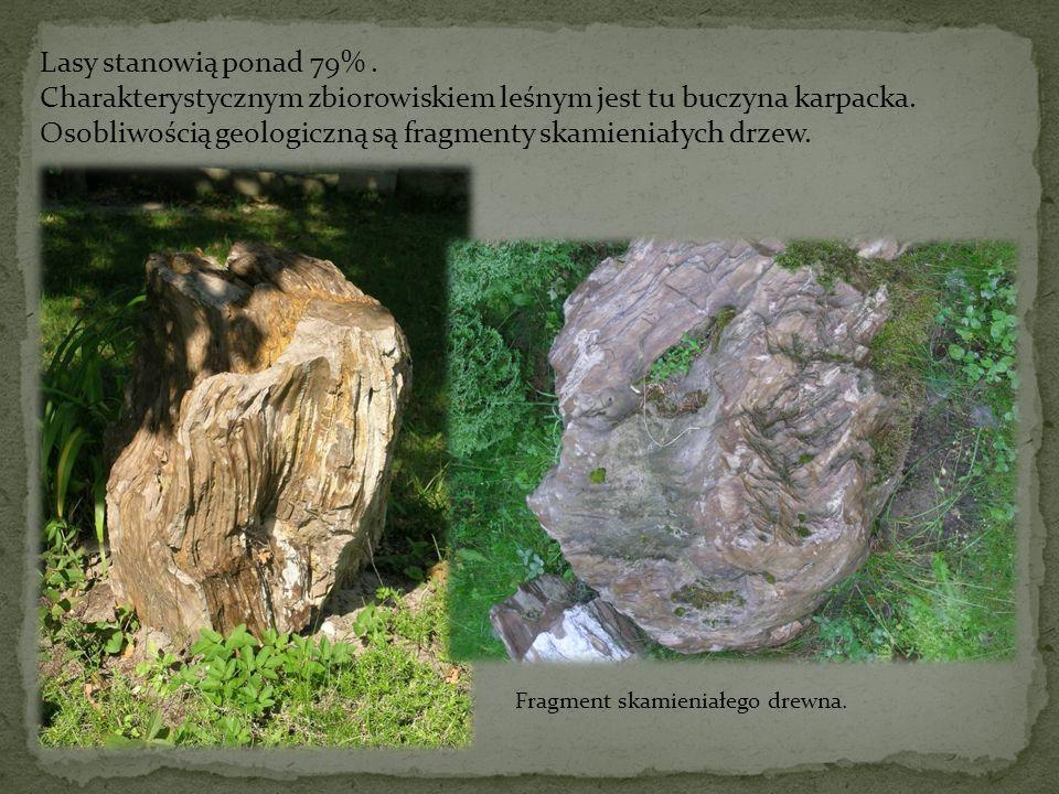 Charakterystycznym zbiorowiskiem leśnym jest tu buczyna karpacka.