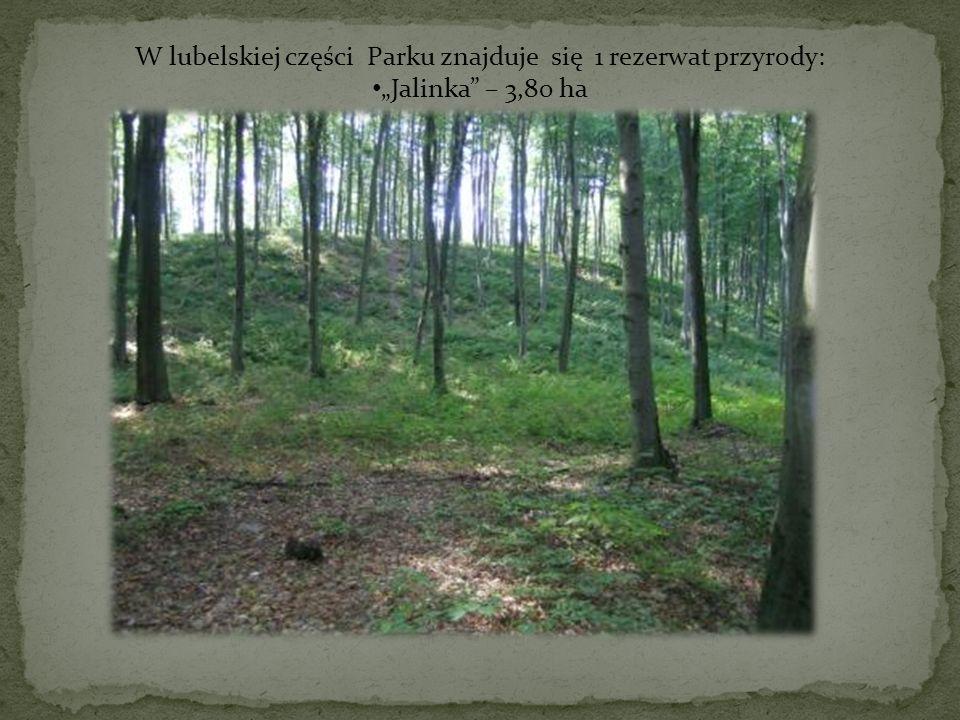 W lubelskiej części Parku znajduje się 1 rezerwat przyrody: