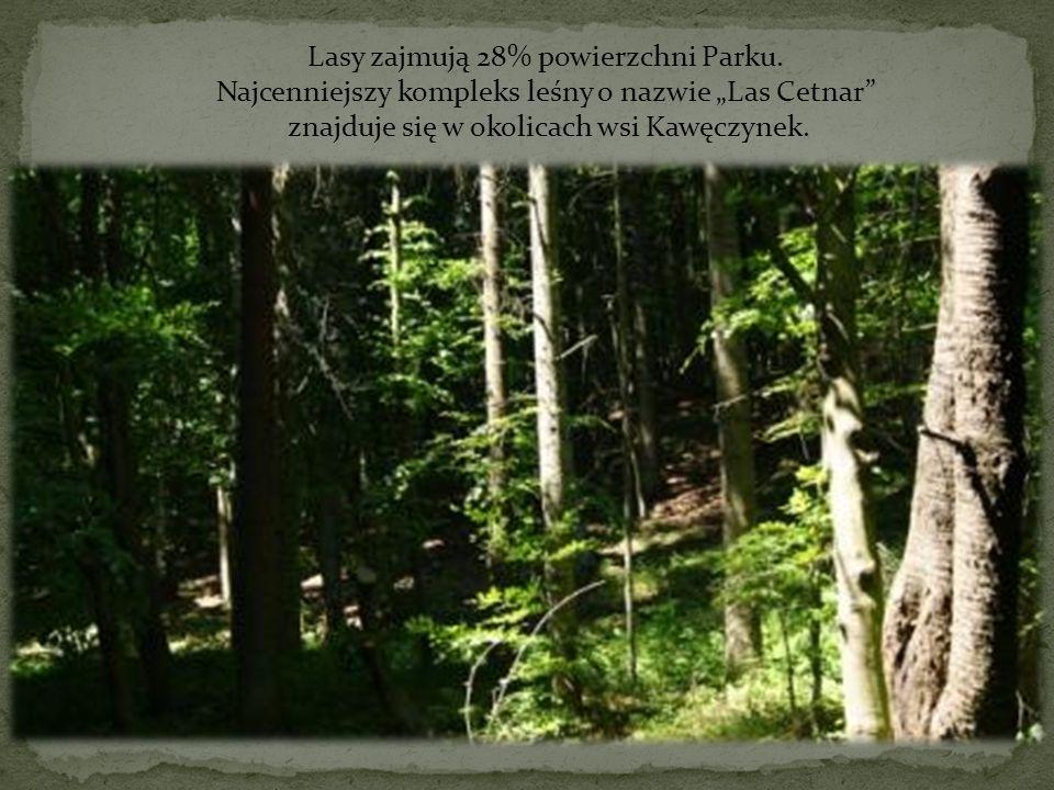 Lasy zajmują 28% powierzchni Parku.