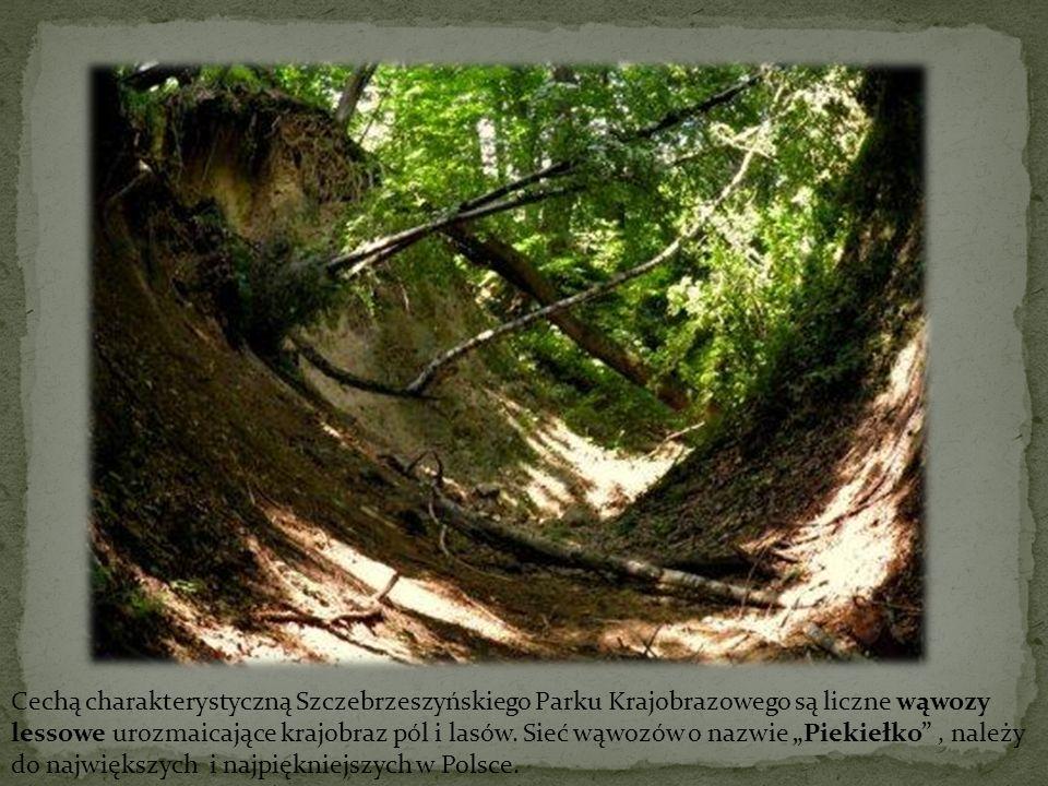 Cechą charakterystyczną Szczebrzeszyńskiego Parku Krajobrazowego są liczne wąwozy lessowe urozmaicające krajobraz pól i lasów.