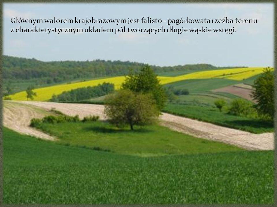 Głównym walorem krajobrazowym jest falisto - pagórkowata rzeźba terenu