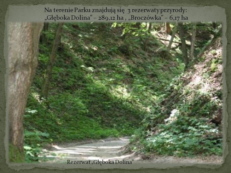 Na terenie Parku znajdują się 3 rezerwaty przyrody: