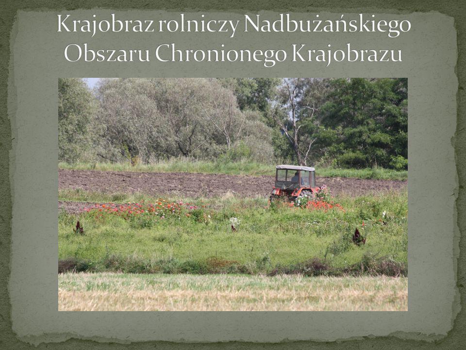 Krajobraz rolniczy Nadbużańskiego Obszaru Chronionego Krajobrazu