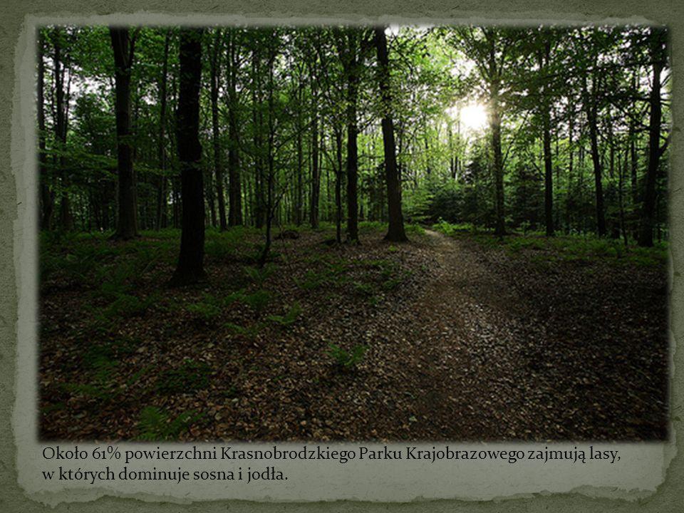 Około 61% powierzchni Krasnobrodzkiego Parku Krajobrazowego zajmują lasy,