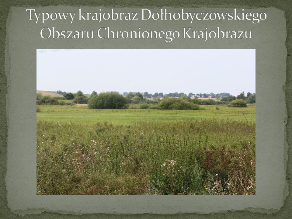 Typowy krajobraz Dołhobyczowskiego Obszaru Chronionego Krajobrazu