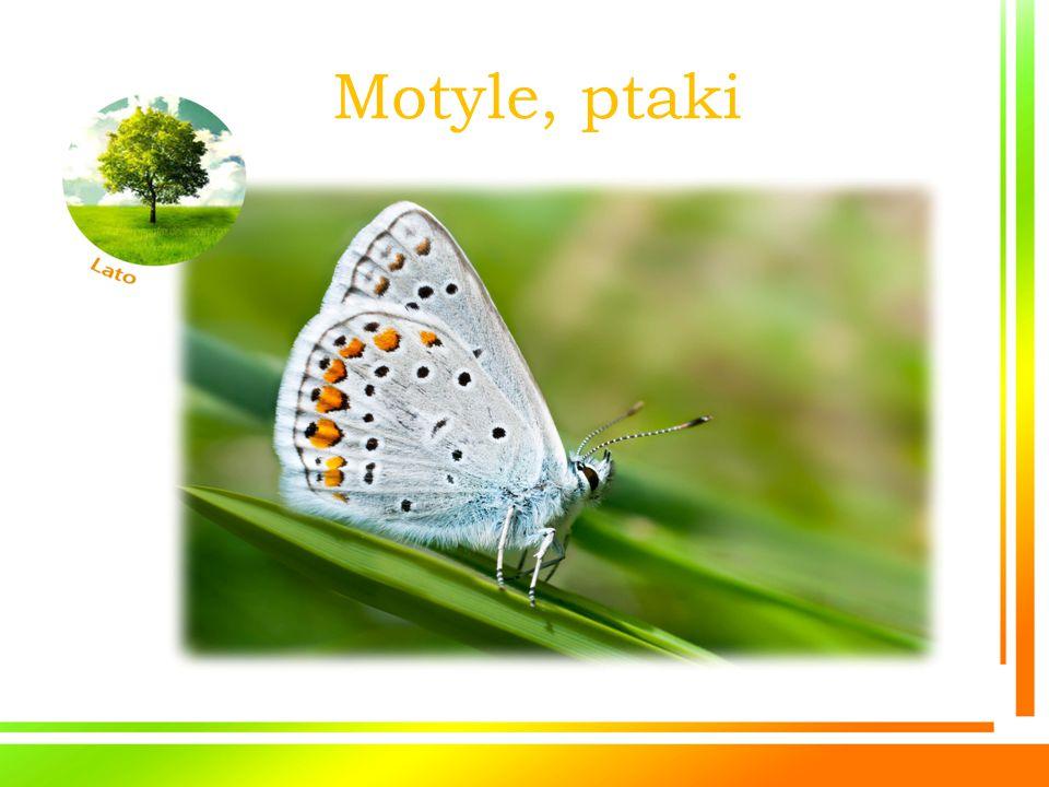 Motyle, ptaki