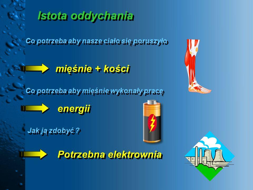 Istota oddychania mięśnie + kości energii Potrzebna elektrownia