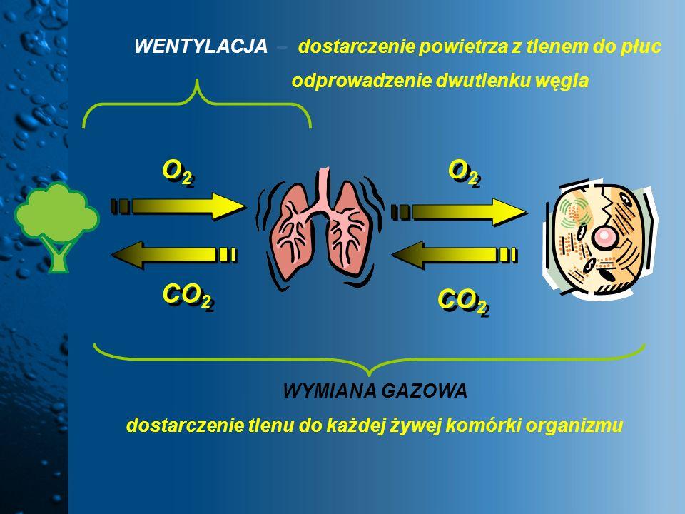 dostarczenie tlenu do każdej żywej komórki organizmu