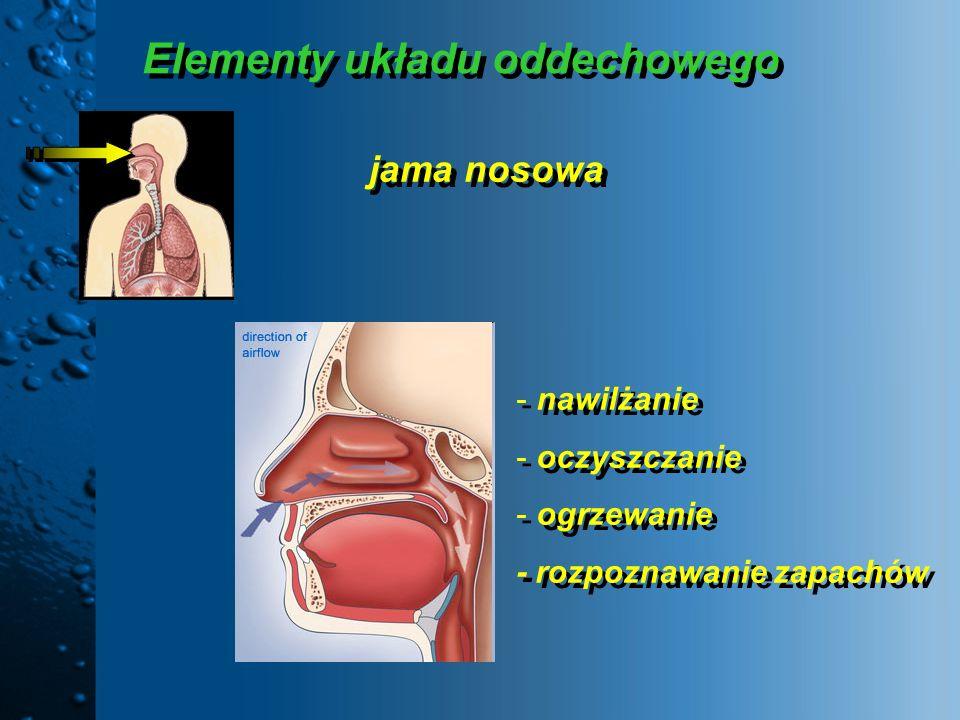 Elementy układu oddechowego
