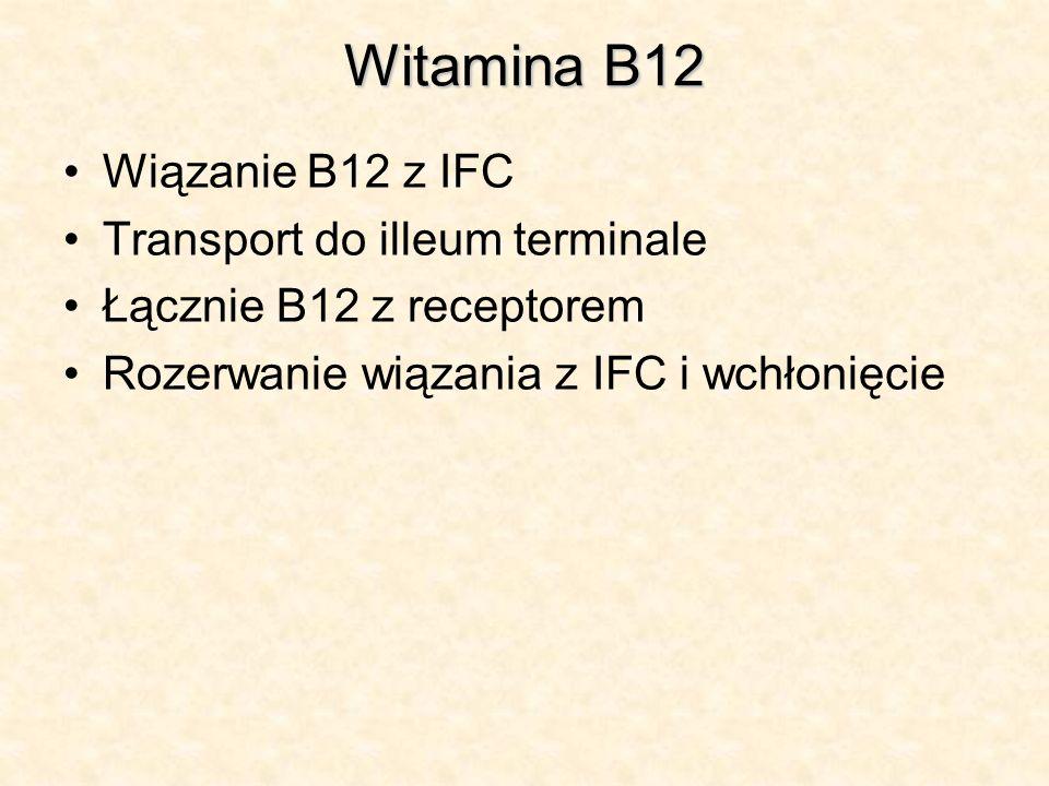 Witamina B12 Wiązanie B12 z IFC Transport do illeum terminale