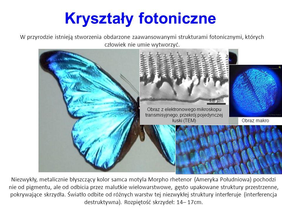 Kryształy fotoniczne W przyrodzie istnieją stworzenia obdarzone zaawansowanymi strukturami fotonicznymi, których człowiek nie umie wytworzyć.