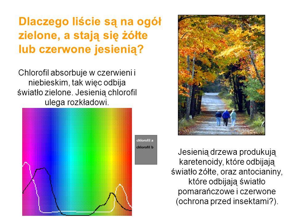 Dlaczego liście są na ogół zielone, a stają się żółte lub czerwone jesienią